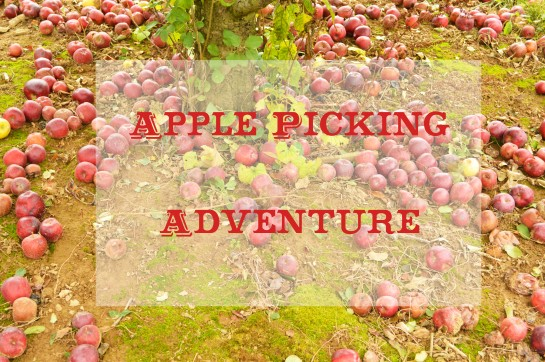 Apple Picking six